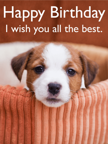I Wish You All The Best Animal Birthday Card Png 368x490 Happy Dog