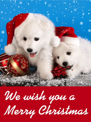 santa puppies christmas card birthday greeting cards. Black Bedroom Furniture Sets. Home Design Ideas