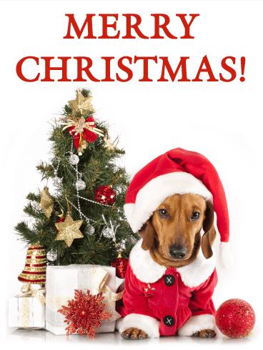 Santa Dachshund Christmas Card | Birthday & Greeting Cards by Davia