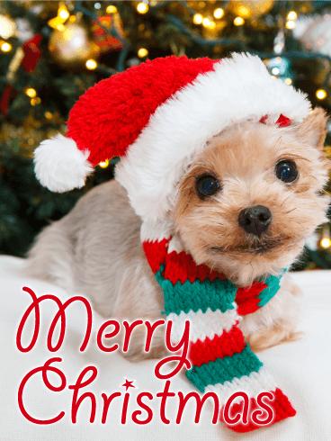 Santa Yorkshire Terrier Christmas Card Birthday